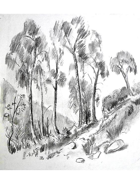 <p>Forêt au-dessus des lacs italiens</p>