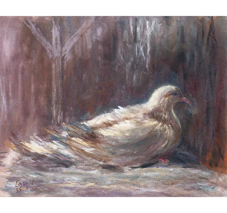 <p>Le pigeon</p>
